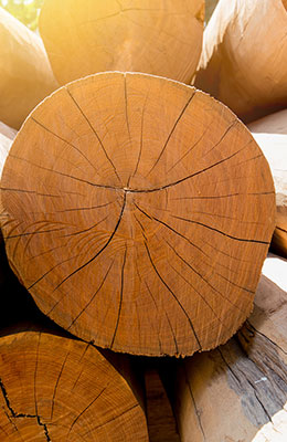 Teakholz – Ein Edelholz mit eigenem Charakter
